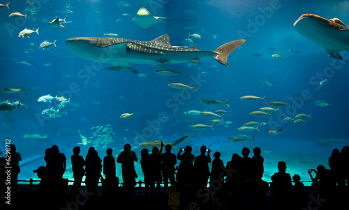 Foto World's largest acrylic aquarium