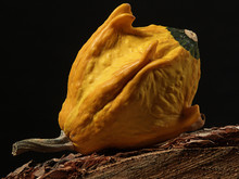 Yellow Gourd On Stump