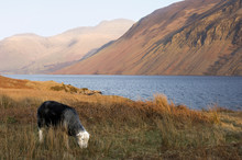 End Of Day At Wast Water In La...