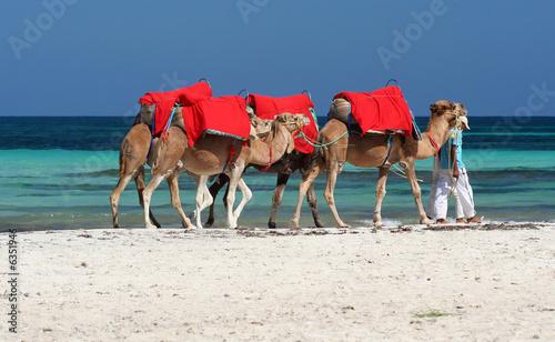Tuinposter Tunesië djerbas kamele