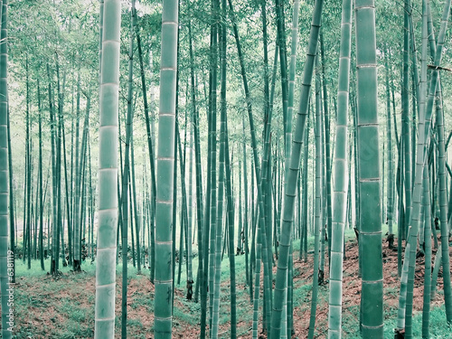 Foto op Canvas Bamboe bamboo forest
