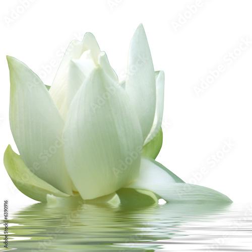 Foto op Canvas Lotusbloem fleur blanche de lotus
