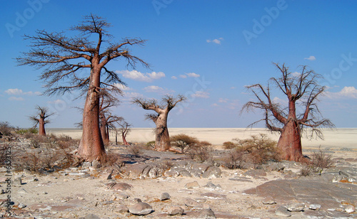 Spoed Foto op Canvas Baobab Baobab Trees on Kubu Island