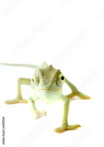 Staande foto Kameleon Chameleon. Isolation on white.