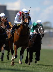 A jockey in action during on a horse during a race.