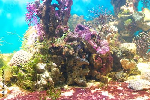 Staande foto Koraalriffen Under water