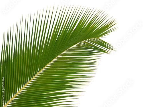 Poster Palmier palme exotique