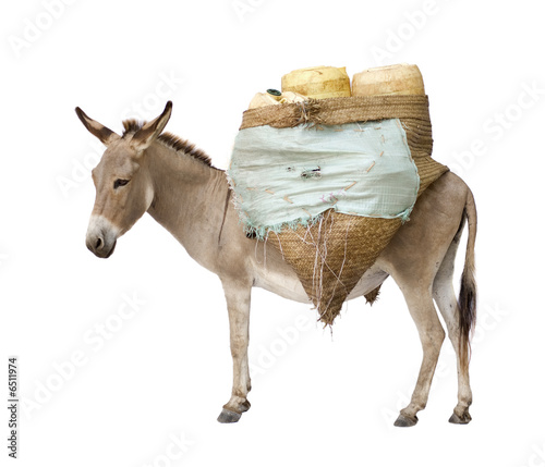 Fotomural donkey carrying supplies