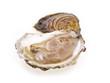geöffnete belon Auster auf der Schale freigestellt auf weißem Hintergrund