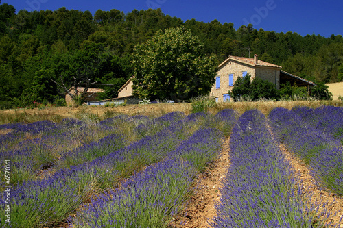 Poster Prune provence