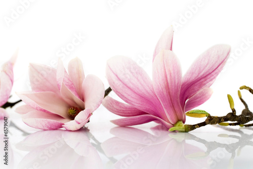 flowers - 6579047