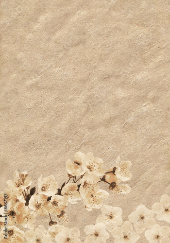 Plum-tree branck covered with flowers in grunge illustration