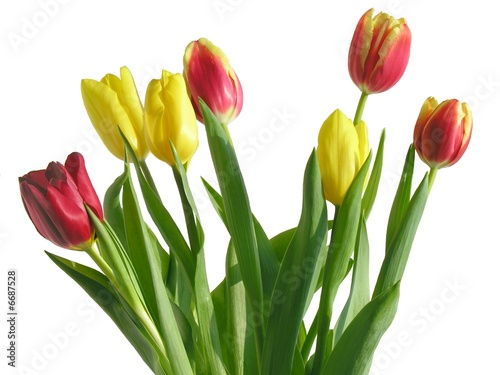Poster Fleuriste red and yellow tulips posy