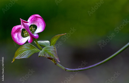 Photo Stands Iris lonely flower