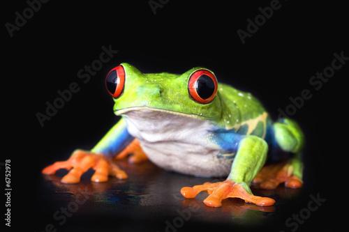 Photo frog closeup on black