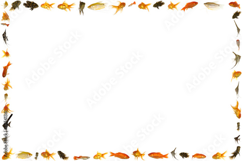 Fish frame isolated on white background - Buy this stock photo and ...