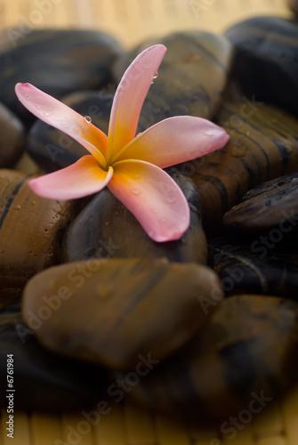 Foto-Stoff - Frangipani and polished stone (von AHMAD FAIZAL YAHYA)