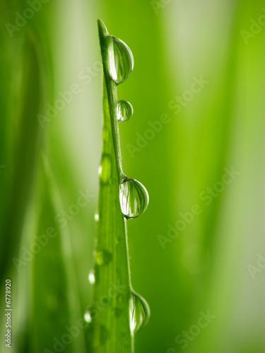 Keuken foto achterwand Paardebloemen en water green grass straws with drops