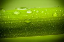 Fresh Green Macro