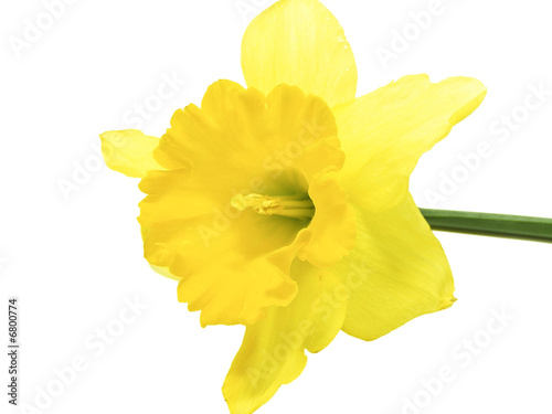 Recess Fitting Narcissus Narcissus