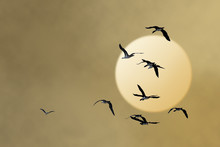 Fly Away Tot He Sun!