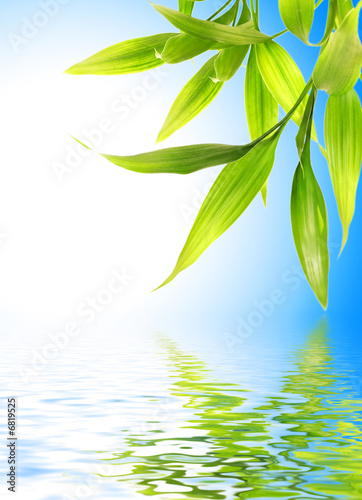 Doppelrollo mit Motiv - Bamboo leaves reflected in rendered water