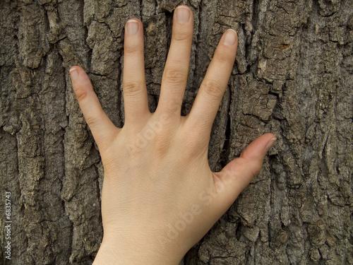Main sur un tronc d'arbre Canvas Print