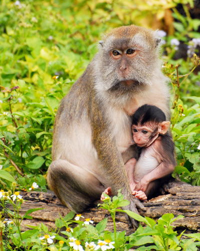 Photo  Mother and Baby Macaque