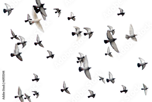 pigeons in white sky