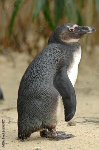 Tuinposter Pinguin Pinguin beim Laufen