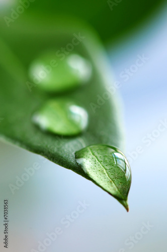 Foto-Duschvorhang - Green leaf with water drops