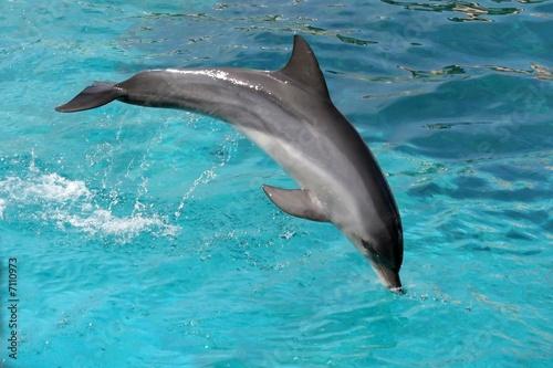 Foto op Plexiglas Dolfijnen Jumping Dolphin