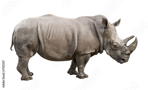 Spoed Foto op Canvas Neushoorn White rhino old male cutout