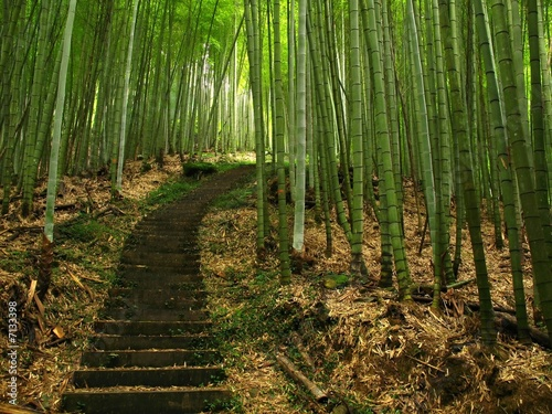 Spoed Foto op Canvas Bamboo Green Bamboo Forest