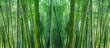 Leinwanddruck Bild - asian bamboo