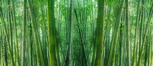Poster Bamboe asian bamboo