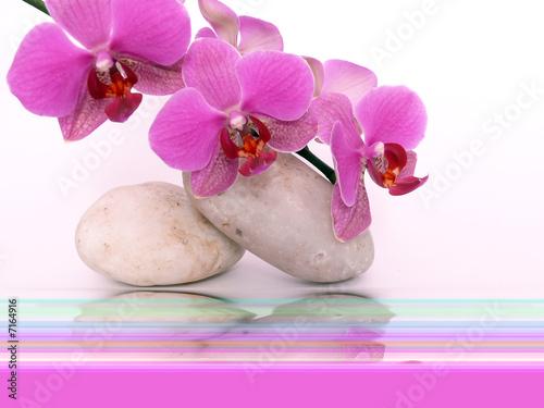 Doppelrollo mit Motiv - Wellness,Orchidee. (von Swetlana Wall)