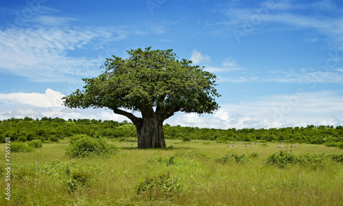 In de dag Baobab Baumlandschaft in Afrika