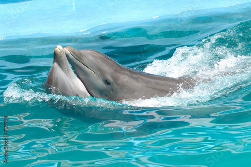 Dolphin couple in love - 7179754