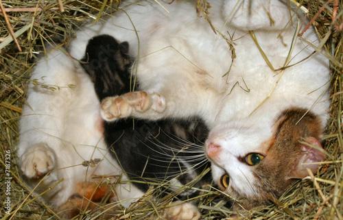 Photo minette et bébé