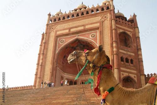 Fotobehang Delhi moschee delhi