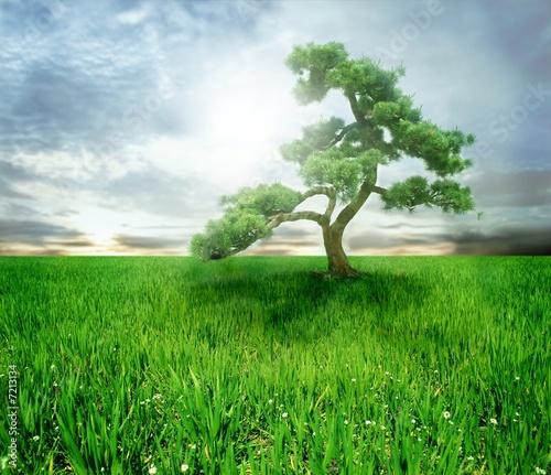 Fotorollo basic - tree