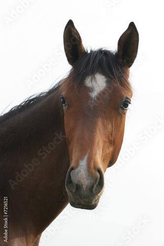 In de dag Paarden Pferde - Kopf
