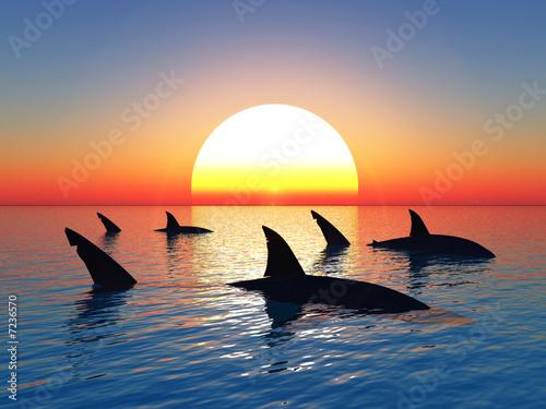 Fototapeta  žraloci