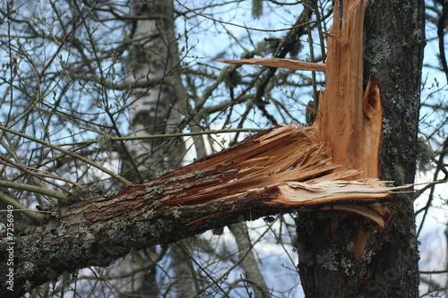 Fotografia  tronco di albero spezzato