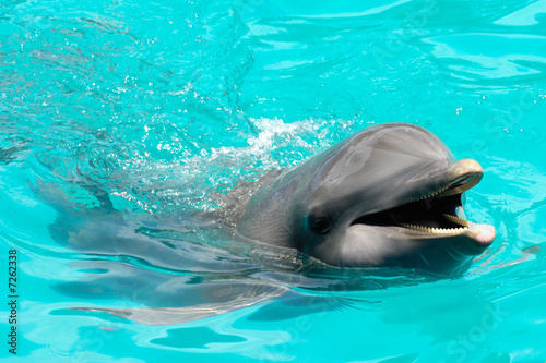 Happy smiling dolphin - 7262338