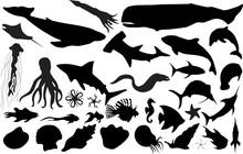 Marine Life Silhouettes (more ...