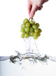 Leinwanddruck Bild - Wet Grapes