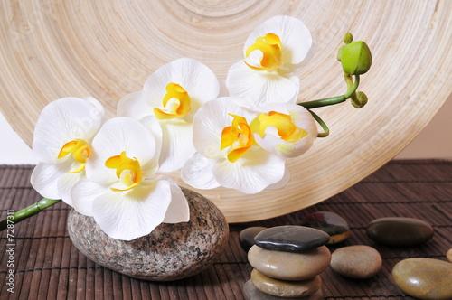 Doppelrollo mit Motiv - Wellness Steine Orchideen (von sonne_fleckl)