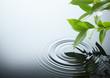 Leinwanddruck Bild water ripple and leaf